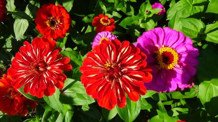 flori roșii
