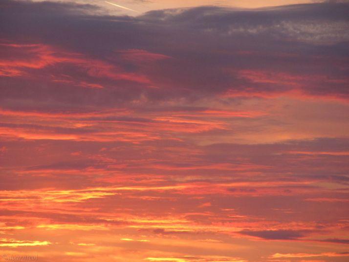 phoenix skies