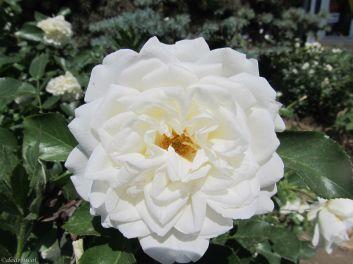 white linen