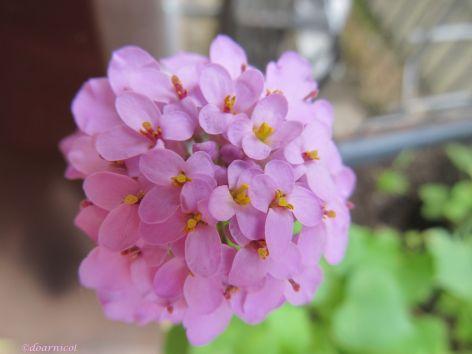flowery flower