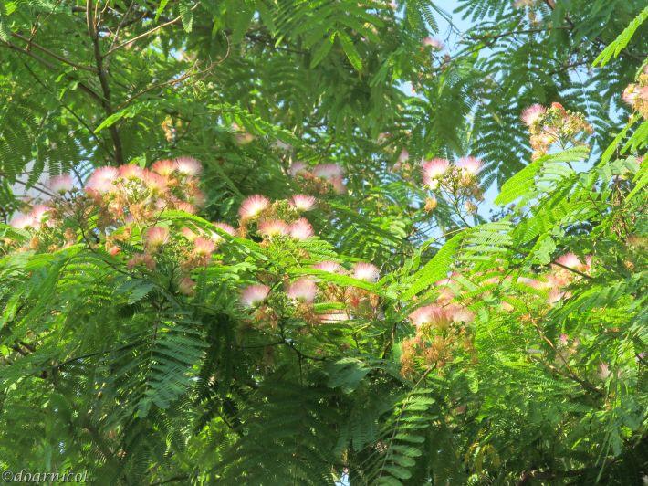 fluffy nest