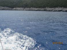 plutim