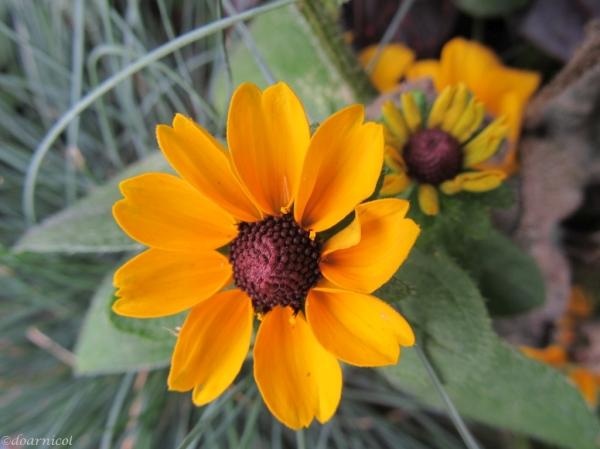 sunet de floare