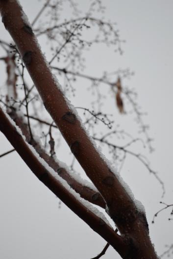 snow?