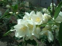 white brightness