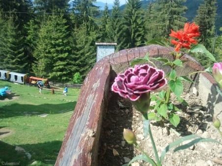 guardian flowers