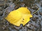 yellow adrift
