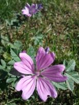 purple serene