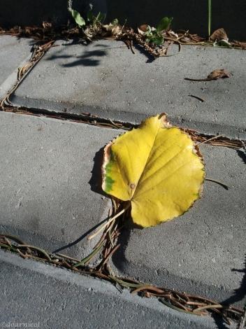 leaf steps