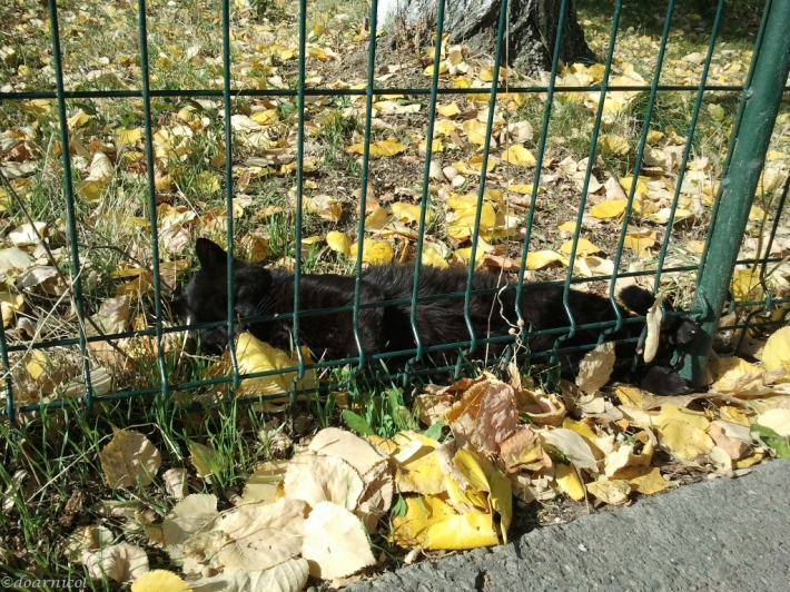 blacky, the lazy leaf-tomcat : ))