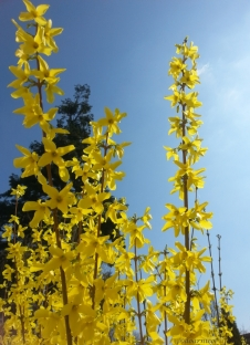 towering yellow delight