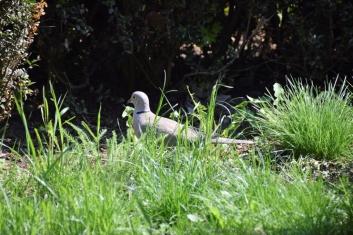 hide-and-seek afternoon