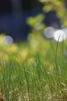 prancing through blades of grass