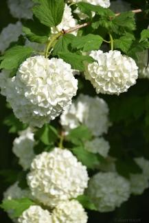 such sweet bloom
