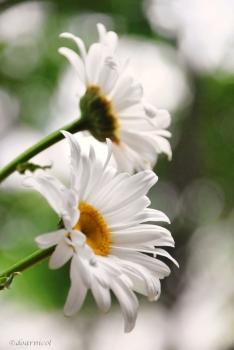 soft whiteness