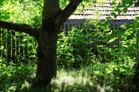 green sunny moments
