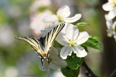 foamy flutter