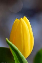 spring sprite