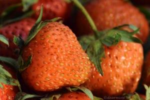 fraise strawberry rest