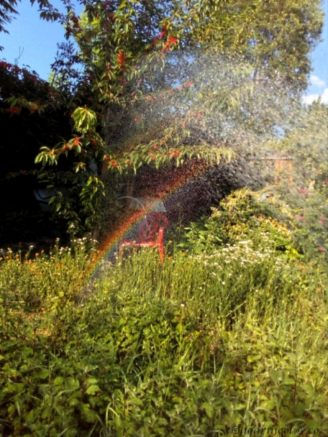 rainbow in the grass