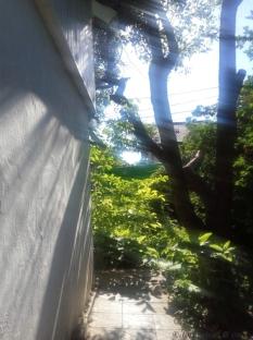 suave curtain of sunshine