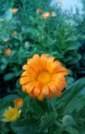 lunar orange