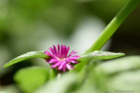 hello, there, cute purple tiny thing... : ))