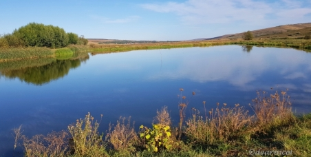 along the pond's blue