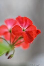 February radiant blush