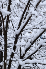 branches of coldness