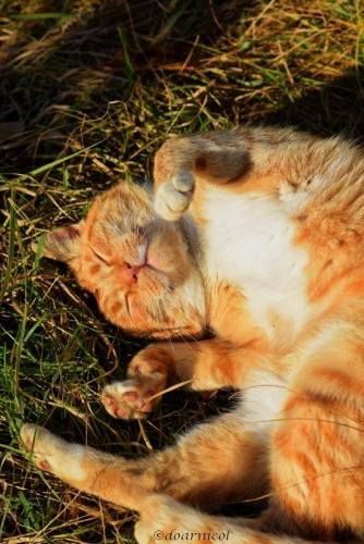 Orange basking in the January sun