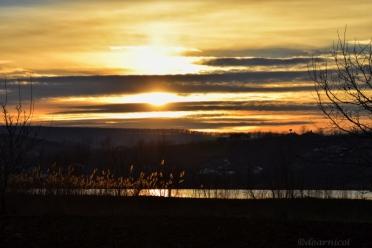 sunset beyond the reeds