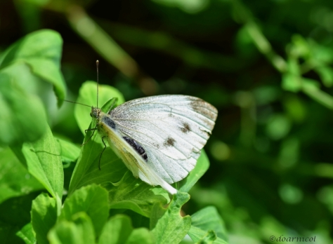 winged softness