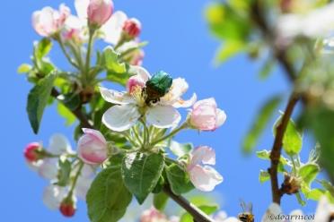 green jewel on cute April bloom