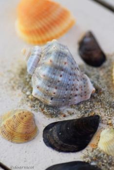 sea shell seconds