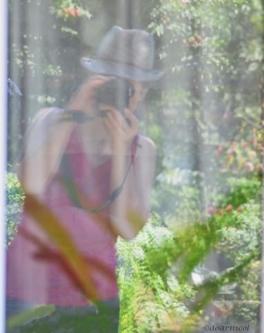 July green in the window