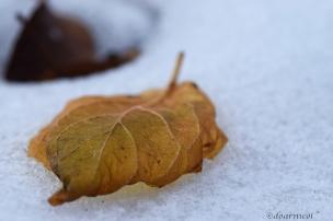 lost leaf