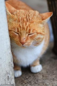 Orange sleepiness