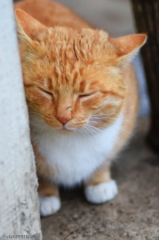 Orange sleepiness