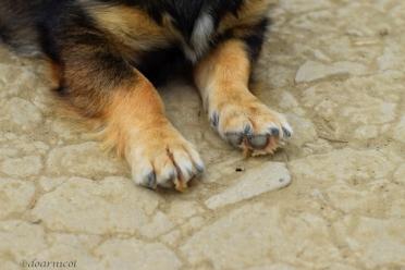 Turuz' paws