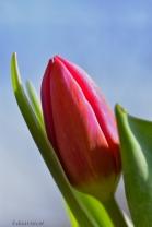 lovely petals resting