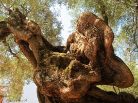 tree trunk torsion