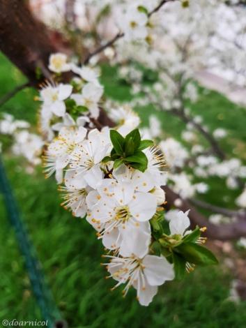 cute bloom