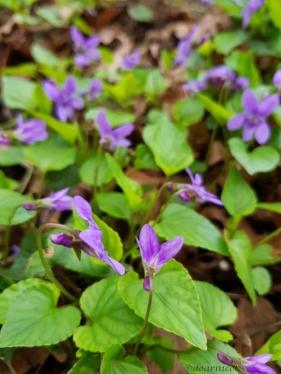violet forest blur