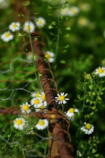 spiraling petals and green