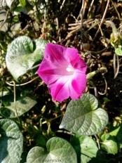 pink sunny wink