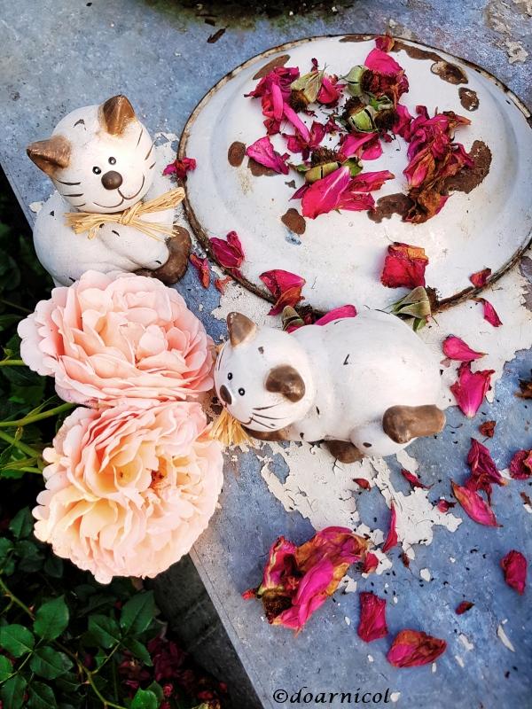 shall I... count them petals? : ))