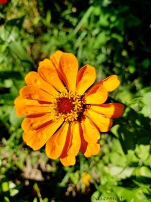 orange circle of delight