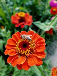 orange... and a bee